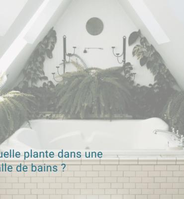 Plante salle de bains
